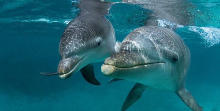 ویروس های بدن دلفین ها هم در برابر آنتی بیوتیک ها مقاوم شدند