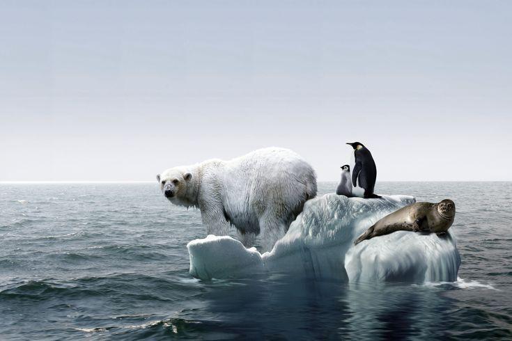 خبرنگاران سرعت گرم شدن قطب جنوب، 5 برابر میانگین جهانی