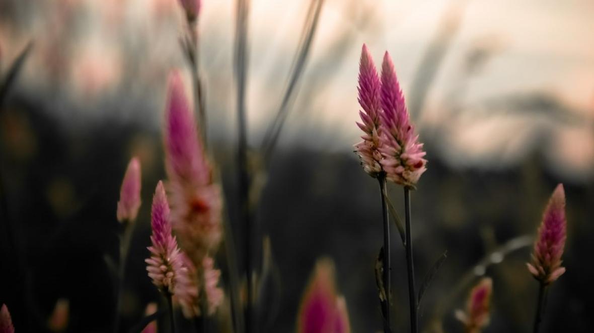 گلهای آپارتمانی شادی آور : 17 گیاه برای خداحافظی با استرس و اضطراب