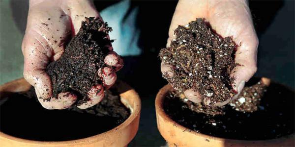 انواع خاک گلدانی و بستر کاشت برای گیاهان