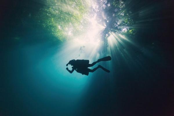 غواصی را در جنگل زیرزمینی مکزیک تجربه کنید